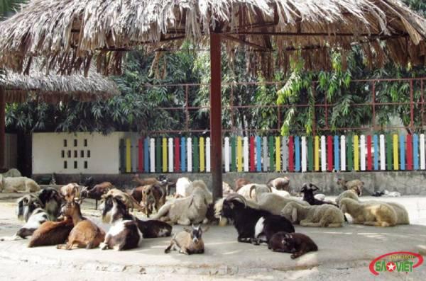 Chơi gì ở khu vui chơi thảo cầm viên Sài Gòn?